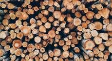 Transporte ilegal de madeira deve levar à apreensão de toda a mercadoria